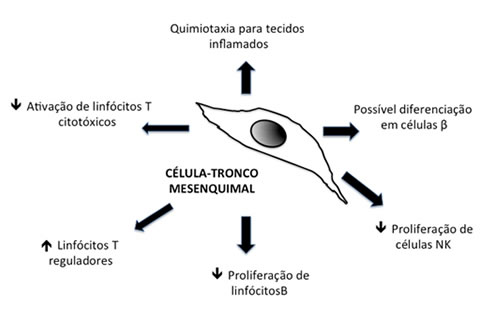 celula tronco diabetes