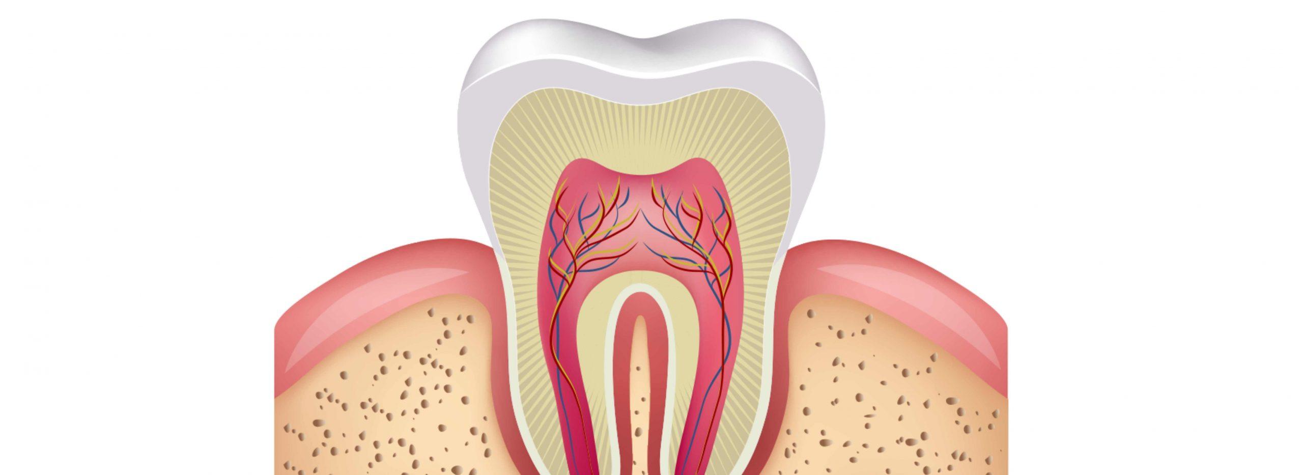 dentes de leite em adultos